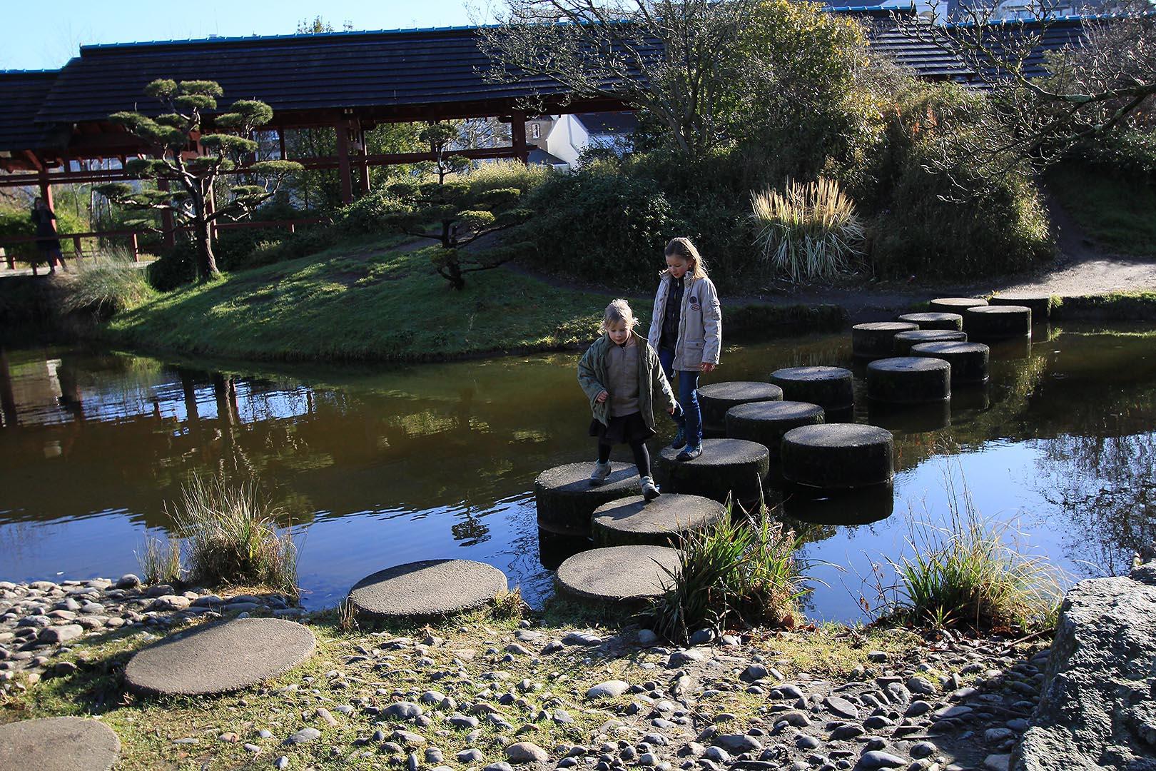 Jardin japonais plantes photos de conception de maison for Jardin japonais plantes