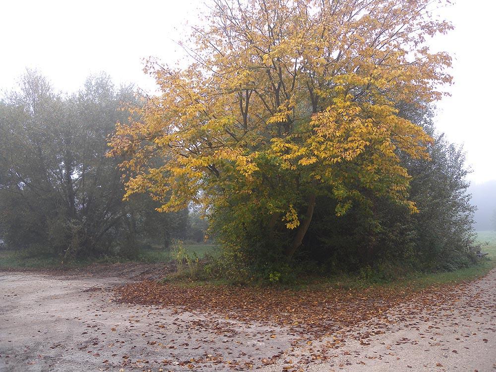 Brouillard # Speedy Sainte Geneviève Des Bois